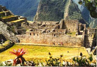 Red Flower.Machu Picchu Ruins
